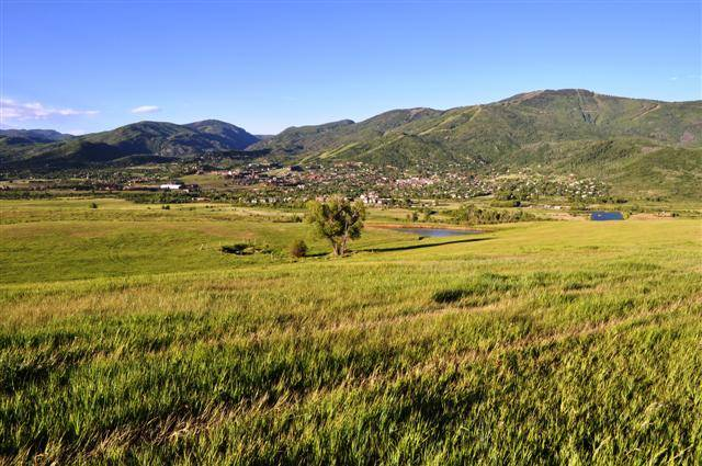 High quality weed free hay pastures
